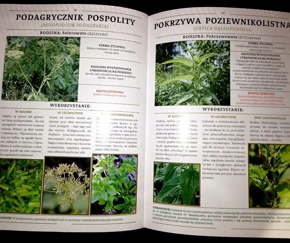 Rośliny lecznicze i użytkowe Nadnidziańskich Parków Krajobrazowych