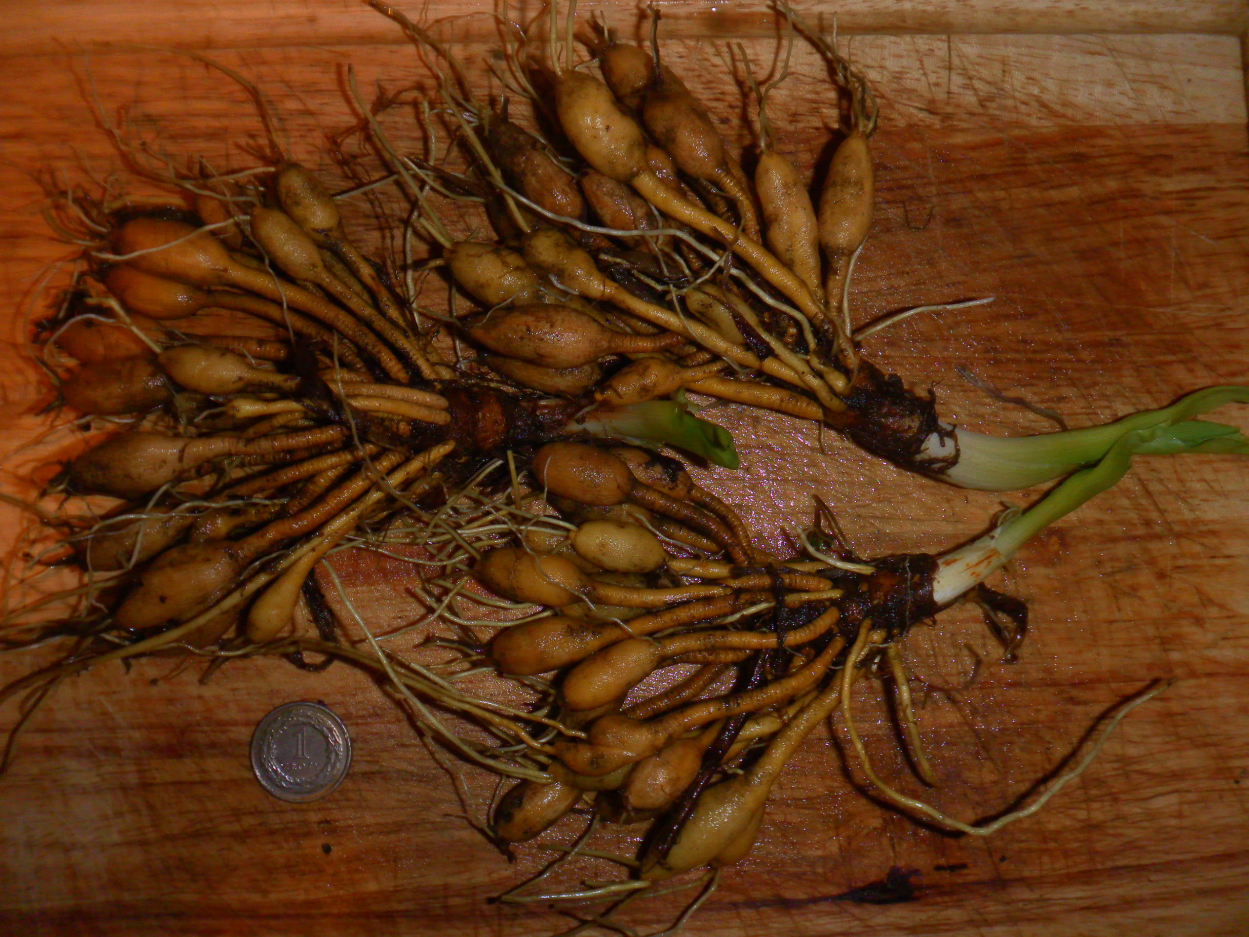 Kandyzowane bulwy liliowca rdzawego – potrawa przykładowa