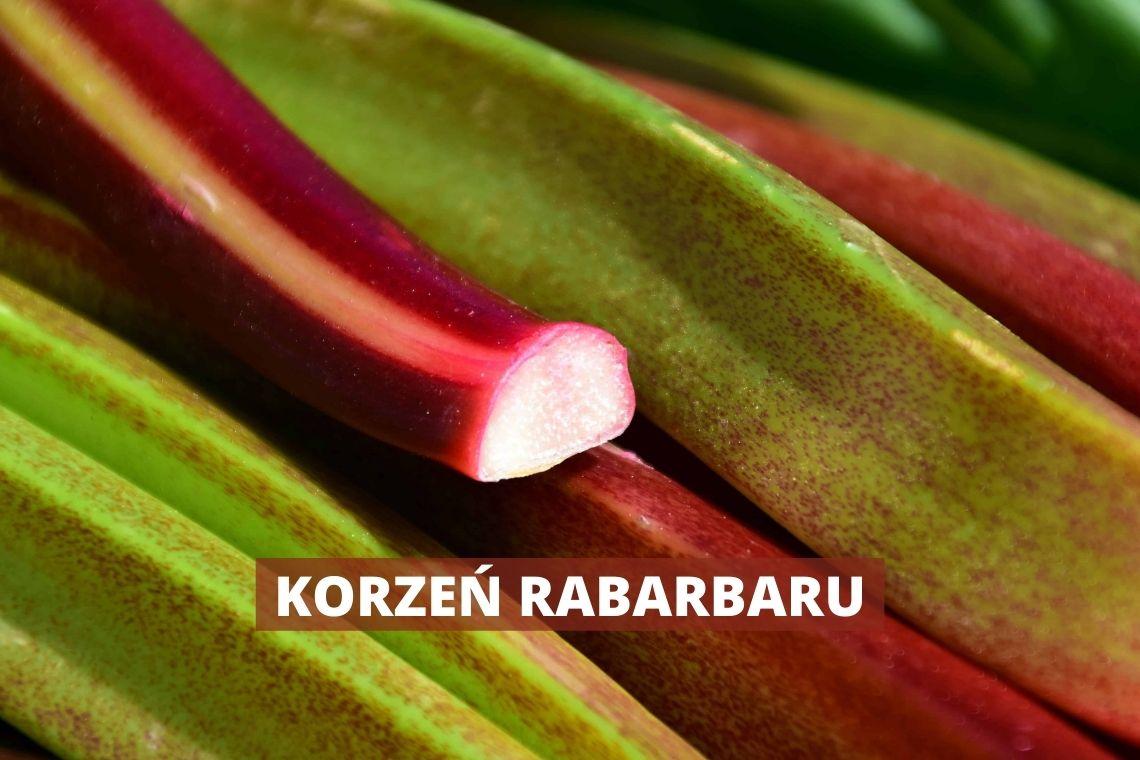 KORZEŃ RABARBARU  –  czy to owoc jest czy warzywo?
