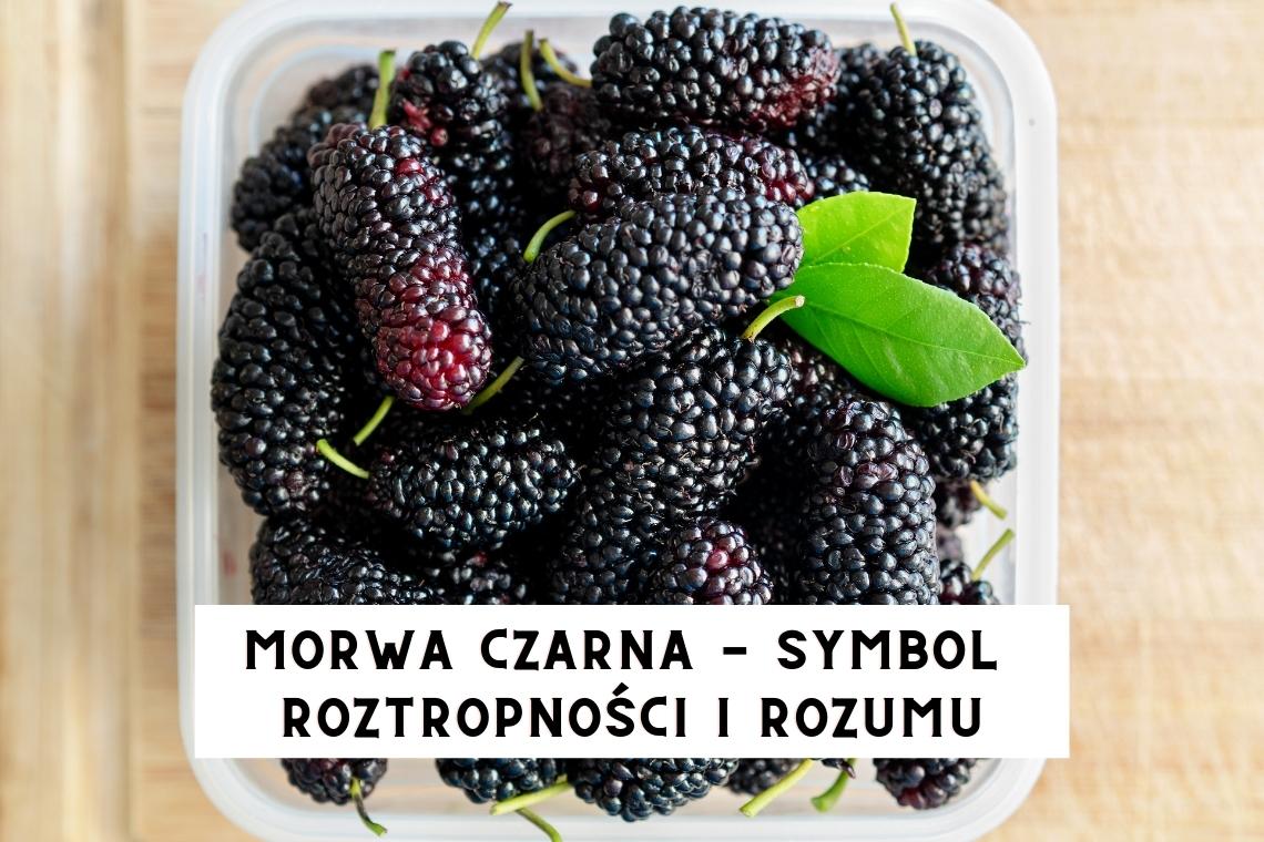 MORWA CZARNA – symbol roztropności i rozumu
